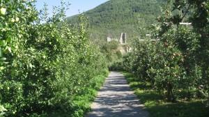 Fahrt durch Obstgärten im Vinschgau