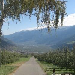 Rennradführer Südtirol / Etschradweg