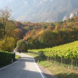 Rennradführer Südtirol: Fennberg/ Natur pur