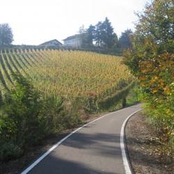 Rennradführer Südtirol: Fennberg/ Radweg St. Michael
