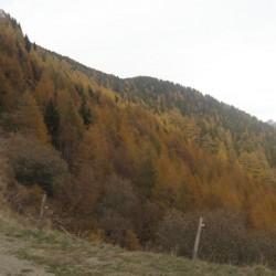 Rennradführer Südtirol Tour-19 / Herbst am Penserjoch