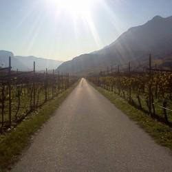 Weinreben im Herbst