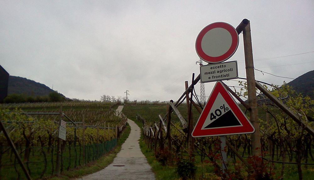 Mit 40 Prozent Steigung durch die Weingüter
