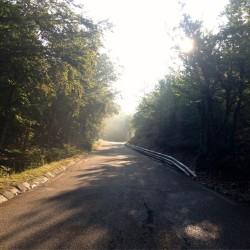 Morgendunst bei der Auffahrt von Bédoin