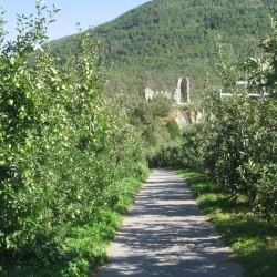 Rennradführer Südtirol / Obstplantagen
