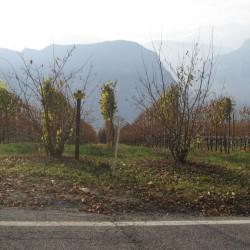 Rennradtour Grill: Wein