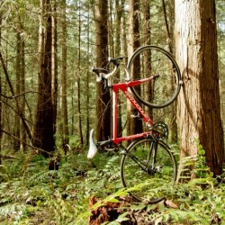 CLUG Rennradhalterung / Wald © Clug