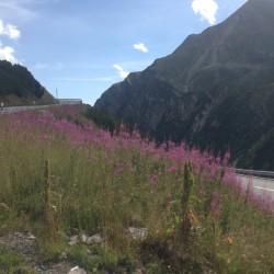Rennradtour Graubünden / Flüelapass Natur