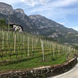 Steile Rennradrunde Südtiroler Unterland: Wein