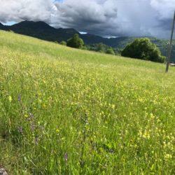 Rennradtour Passo San Boldo - Passo Praderadego / Frühling